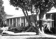 , Don Bank in the 1950s. The magnolia pictured here is still a feature of the garden. Stanton Library